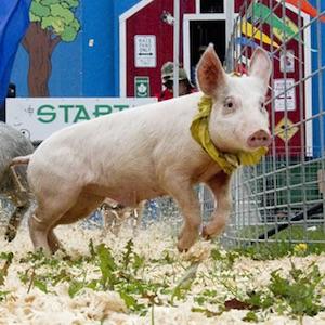 Pig Race/Petting Zoo – Ken Jen Zoo